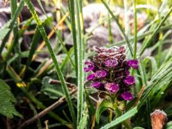 21 мая ночью в отдельных районах Беларуси ожидаются заморозки на почве до -2°C