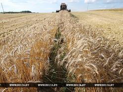 Несвижский район первым в Минской области завершил уборочную