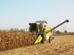 В «Слуцком крае» отчитались об уборке кукурузы и свёклы