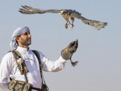 Катарцы хотят начать соколиную охоту под Копылем, белорусы против