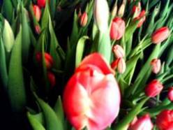 8 Марта - день благодарности женщинам