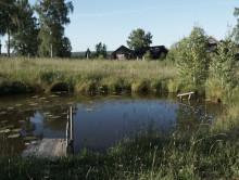 Поссорился с компанией. Тело 17-летнего студента из Минской области нашли в пруду