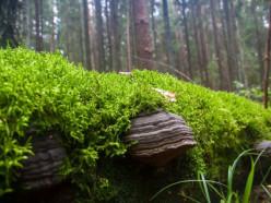 В Узденском районе нашли пенсионерку, которая два дня ходила по лесу