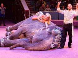 «Свободу принесла только смерть». В Гомеле во время гастролей умерла слониха Майя, освобождения которой добивались зоозащитники всего мира