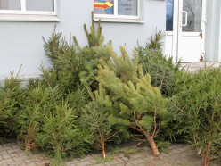 Сколько новогодних елок купили случчане в 2019 году