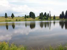 Трагедия в Копыльском районе — в пруду возле деревни Подлужье утонула 14-летняя девочка