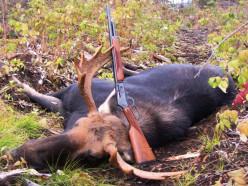 Браконьер из Слуцкого района отправится в колонию за убитого лося