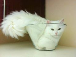 Лауреат Шнобелевской премии французский ученый Марк-Антуан Фардин доказал, что коты бывают жидкими