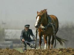 Налоговая про услуги по выращиванию сельскохозяйственной продукции