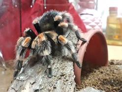 Мой милый питомец – паук! Истории случчан, которые стали киперами