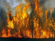 Из-за жары: запрет на посещение лесов ввели уже в 24 районах Беларуси