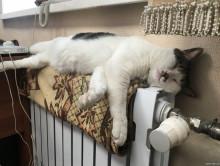 Будут ли случчане платить за пропавшее тепло в квартирах