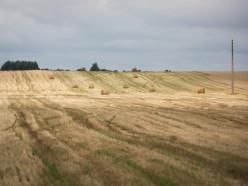 Стародорожский район признан неблагоприятным для сельскохозяйственного