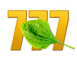 «Экспресс 777» возобновляют работу