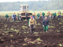 Слуцкие студотряды будут работать на заготовке урожая и строительстве дорог