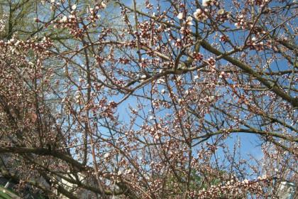 Стихийная весна 2013
