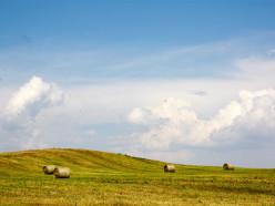 Слуцкий район — первый по намолоту, по урожайности — Несвижский