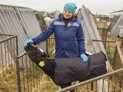 На клецком комбинате бытового обслуживания сшили «зимнюю одежду» для телят