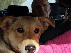 Не могли пройти мимо. Как американская семья спасла бездомного щенка в Слуцке
