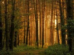 В Слуцком районе вводится запрет на посещение лесов
