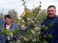 «Плоды наших персиков один в один, как молдавские». Интервью из питомника под Слуцком