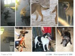 Солигорский приют для животных расформировывается, собаки срочно ищут дом