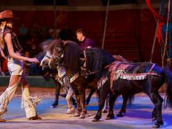 19-21 октября Слуцке выступит цирк «Антре»