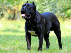 Санстанция предупреждает: у собаки, которая находилась в Слуцке, обнаружено бешенство
