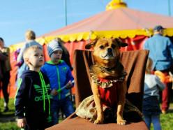 До конца недели в Слуцке будет выступать цирк-шапито «Олимпия»