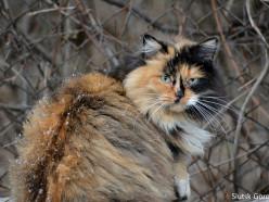 Мороз и снег. С начала недели в Беларуси заметно похолодает