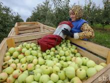 Отдел занятости приглашает желающих на уборку сельскохозяйственной продукции