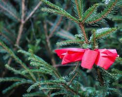 Случчане смогут получить новогоднюю ёлку за правильные ответы о пожарной безопасности