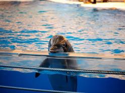 «Зелёные» добились: Минприроды предлагает запретить контактные и передвижные зоопарки