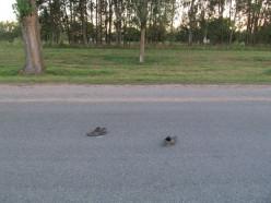 Ночью на трассе Р23 в Слуцком районе под колёса попал мужчина, похожее ДТП произошло в Клецком районе