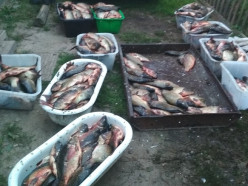 Житель Копыльского района на своей машине похитил у рыбхоза почти 400 кг рыбы