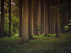 В районах Минской области отменяют ограничения на посещение лесов