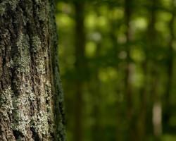 Как случчане могут принять участие в «Неделе леса»