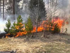 В Слуцком и Солигорском районах введён запрет на посещение лесов