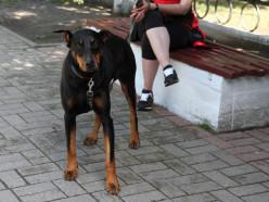 Как брошенную в лесу раненую собаку спасали всем Солигорском
