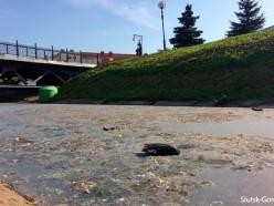 Грязная река в центре Слуцка и мёртвые голуби - в чём причина? (обновлено)