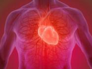Исследование: для здорового сердца не достаточно тренироваться три раза в неделю