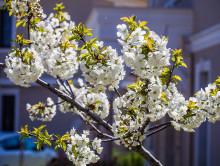 29 марта в Слуцке побит температурный рекорд, а 30 марта вернётся зима
