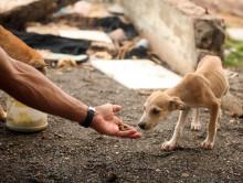 Большое мероприятие в помощь бездомным животным пройдет в Слуцке 23 ноября