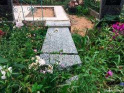 Второе надгробие повреждено деревьями на кладбище в Брановичах - люди пытаются взыскать ущерб