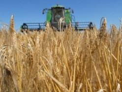 Слуцкий район первым намолотил 100 тысяч тонн зерна
