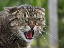 Бешеные кошки покусали четырёх человек в Барановичах