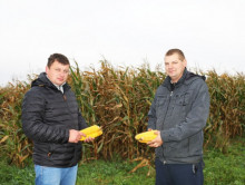 В Слуцком районе - самая большая в области площадь кукурузных посевов