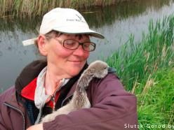 Добрая история спасения лебедёнка на реке в Слуцком районе