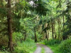 В Минской области начали отменять запреты на посещение лесов