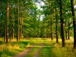 Запрет на посещение леса в Слуцком районе снят